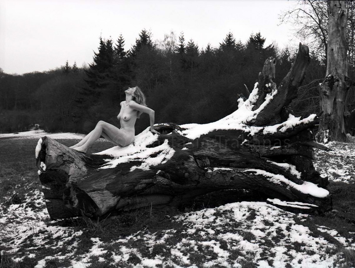 nude photography of woman on tree trunk
