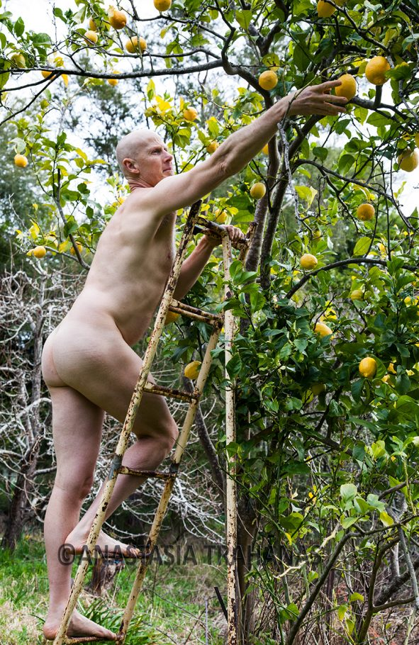 man picking lemons